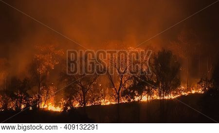 Forest Fire Disaster Is Burning Caused By Humans