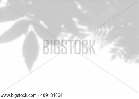 Vector Summer Background Of Plant Shadows. Shadow Of Tree Leaves On A White Wall. White And Black To