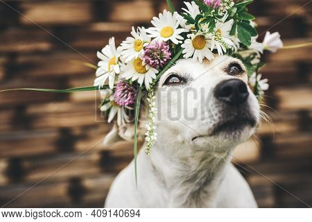 Close-up Of A Dog With A Wreath Of Wildflowers On A Summer Day. Funny Portrait Close-up Of A Pet Jac