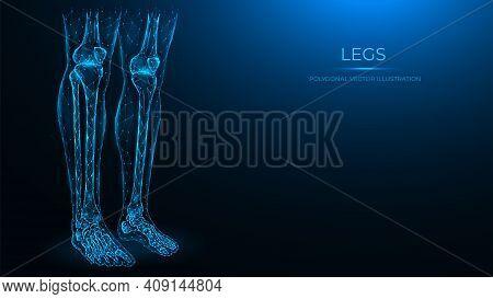 Polygonal Anatomical Vector Illustration Of Human Legs. Femur, Patella, Tibia, Fibula, And Foot Bone
