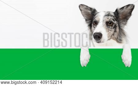 Dog With Paws Resting On A Uniform Green Partition, The Whole Thing Seen Up Close And From The Front
