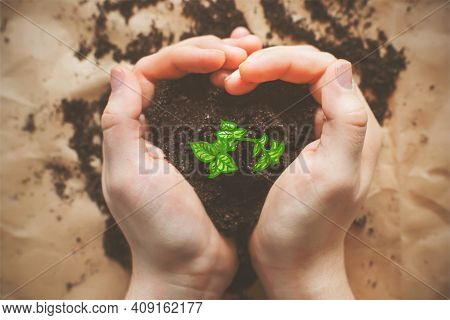 A Green Young Drawing Sprout Grows Out Of The Ground, Which Is Held By The Hands Of A Man, Folded In