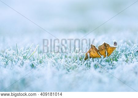 Frost On The Leaf And Grass. Frost On The Grass In The Cold Season. Grass Under The Snow In Spring T