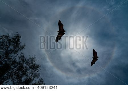 Two Large Bats Flying In The Night Under A Bright Full Moon With Visible Aurora