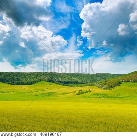 Wheat Field And Countryside Scenery. Picturesque Hilly Area.