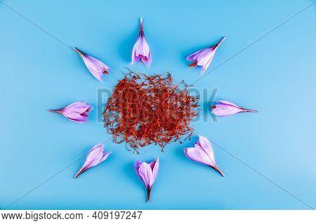 Autumn Saffron Flowers Are Arranged Around Dried Saffron Stamens On A Turquoise Background.