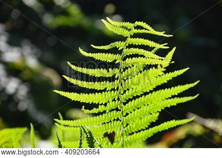 Fresh And Green Himalayan Fern With Defined Pattren