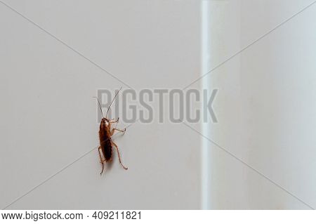 Brown Cockroach Close-up Crawling Up On A Light Background Of The Refrigerator Wall