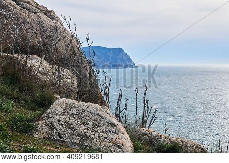 View Of The Winter Sea From A High Coastal Cliff With Leafless Bush
