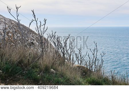 View Of The Winter Sea From A High Cliff With Leafless Bush
