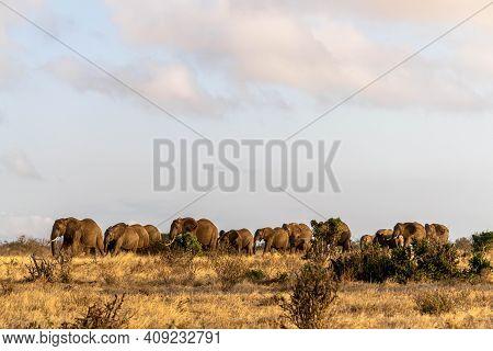 Herd Of Elephants Walking In A Row In The Masai Mara National Park In Kenya