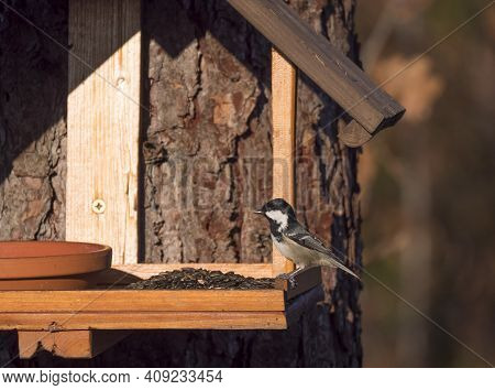 Close Up Coal Tit Or Cole Tit, Periparus Ater Bird Perched On The Bird Feeder Table With Sunflower S