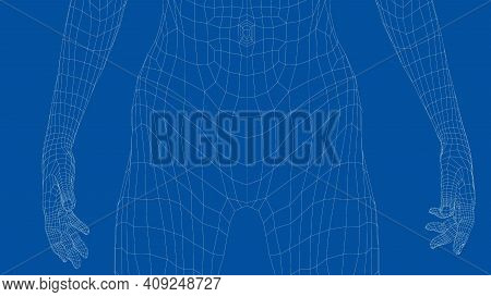 Wireframe Female Abdomen. Close-up View. Anatomy Concept. Vector 3d Rendering