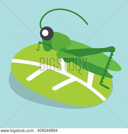 Grasshoppers Perched On The Leaves Vector Illustration. Eps 10
