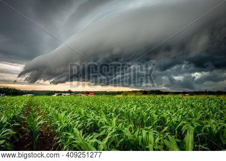 An Ominous Shelf Cloud Looms Over A Cornfield. Raleigh, North Carolina.