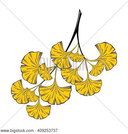 A Sprig Of Ginkgo Biloba On A White Background In Vector