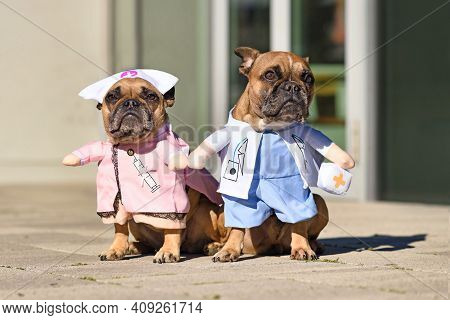 Pair Of French Bulldog Dogs Dressed Up With Funny Doctor And Nurse Costume With Fake Arms