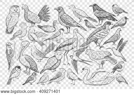 Various Birds Doodle Set. Collection Of Hand Drawn Heron Owl Black Grouse Swift Swallow Pelican Swan