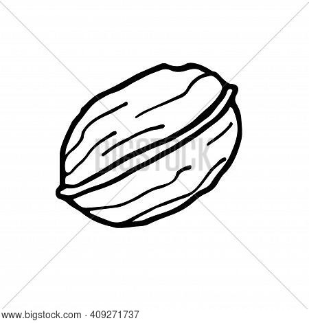 Walnut. Hand Drawn Vector Nut. Doodle Outline Illustration. Organic, Fresh Cooking, Healthy Diet Ing