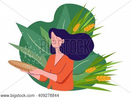 Girl Selecting Rice Grain From It Shell Seed Wearing Traditional Clothes In Padi Field