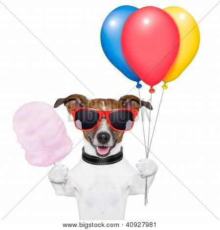 dog with bunch of balloons and cotton candy and shades poster