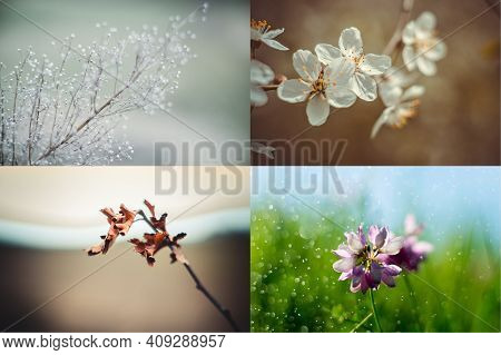 Four Seasons. Spring, Summer, Autumn, Winter. Four Seasons Collage, Branches & Flower In Landscape.