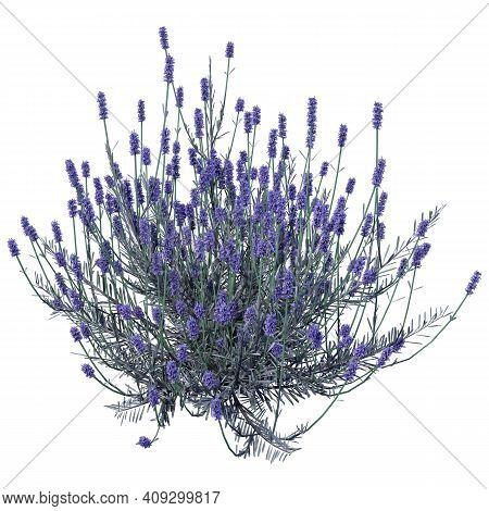 3D Rendering Lavender Flowers On White
