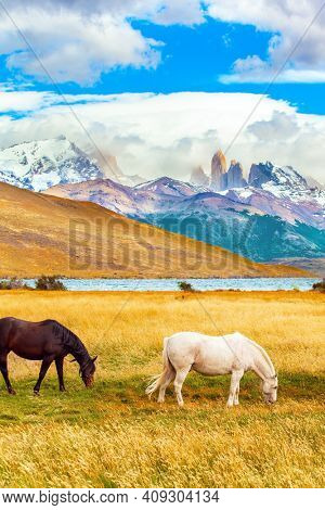 Gorgeous bay and white mustangs graze in dense grass. Lagoon Azul is an amazing mountain lake near three rocks - torres. The famous Torres del Paine park in southern Chile