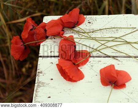 Beautiful poppy flower is on the grunge obsolete wooden background with copy space