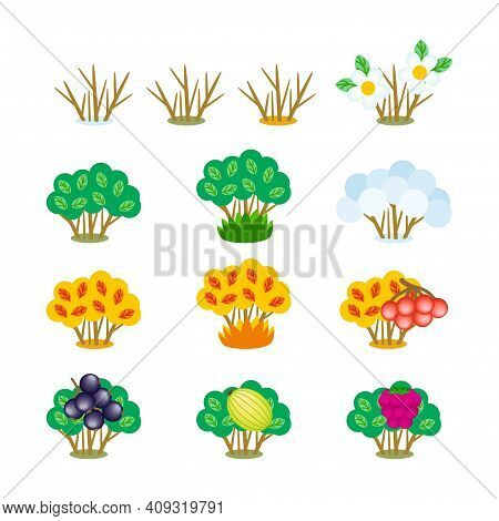 Set Of Vector Cartoon Cliparts Of Autumn, Winter, Summer And Spring Bushes Isolated On White. Creati