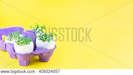 Banner With Garden Cress Growing In Eggshells, On Yellow Background, Purple Paper Egg Holder, Horizo