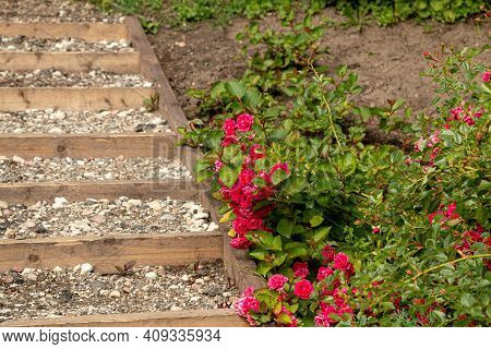 Red Flowers Bloom On The Stairs On The Hill
