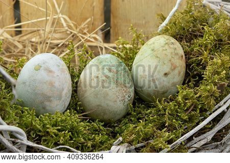 Colorful Easter Egg Concept. Preparing For Easter