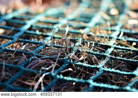 Close Up Of Hay Under A Green Hay Net