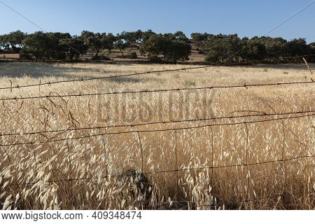 Agricultural Landscapes Of Cereals In Spain