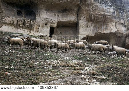 Flocks Of Sheep Roam On A Hillside Under The Walls Of The Abandoned Medieval Cave Town