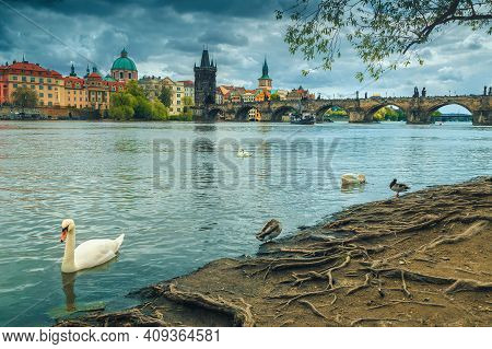Majestic European City With Great Touristic And Historic Locations. Tame Swans And Ducks On The Shor
