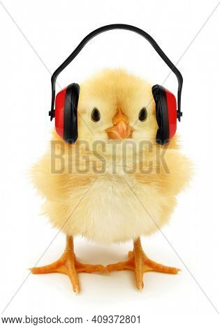 Cute chick with headphones conceptual photo