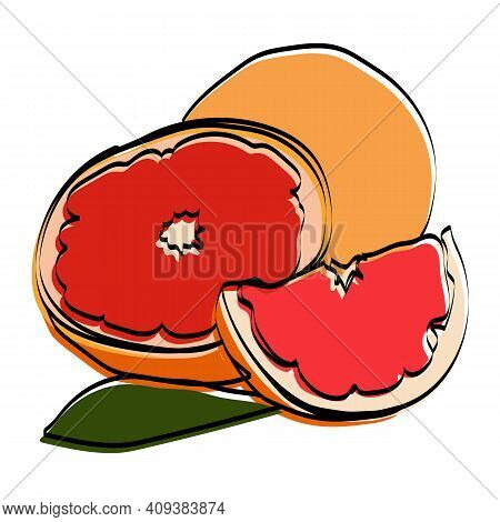 Silhouette Of The Fetus. Grapefruit. Vector Illustration.
