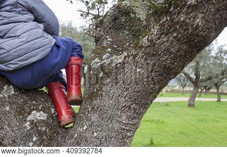 Child Boy Climbed Over Tree On Rainboots. Children Discover Nature On Winter Season