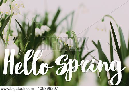 Hello Spring Floral Greeting Card, Handwritten Greetings On  First Spring Snowflakes Flowers Growing