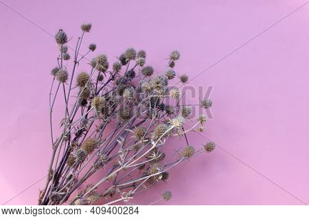 Bunch Of Sea Holly (eryngium) Purple-blue Plant On Colored Background. Purple Flower And Blank Greet
