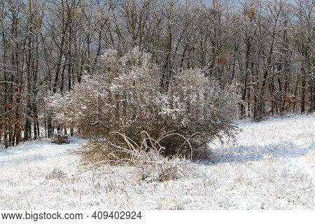 Winter Landscape. Trees In A Meadow On Which There Is Snow. Snow Flies Through The Air. There Are Wo