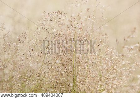 Background Texture Dry Field Grass Close-up. Macro Photo, Flower, Grass Background, Macro Photograph