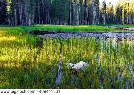 Quiet round grassy lake. The Tioga Road and Pass in Yosemite Park. USA. Majestic coniferous forest are reflected in the lake