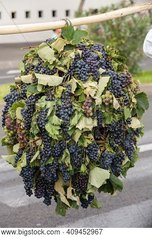 Decorations With Ripe Grapesduring Madeira Wine Festival - Historical And Ethnographic Parade In Fun