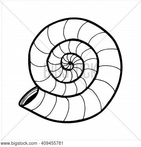 Seashell, Hand Drawn Isolated Vector Illustration In Black And White