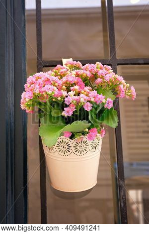 Pot With Bush Of Blooming Plant For Landscape Design. Bush With Pink Flowers In Metal Flowerpot.
