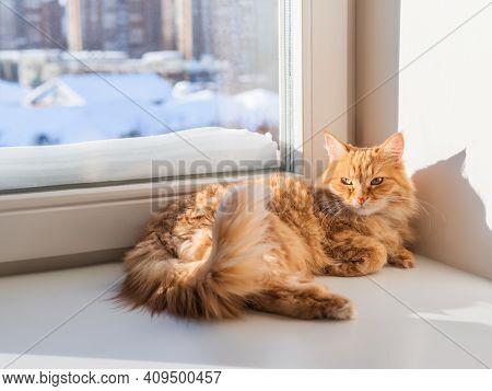 Cute Ginger Cat Relaxes. Furry Pet Settled Comfortably On Windowsill. Furry Pet In Sunlight. Winter