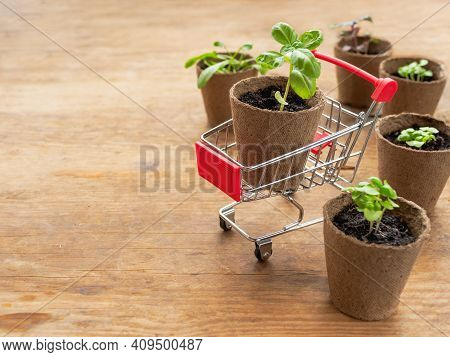 Shopping Cart With Basil Seedling On Wooden Table. Spring Sale In Mall And Flower Shops. Season Of P